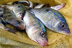Морская рыбалка в Крыму - Морской окунь